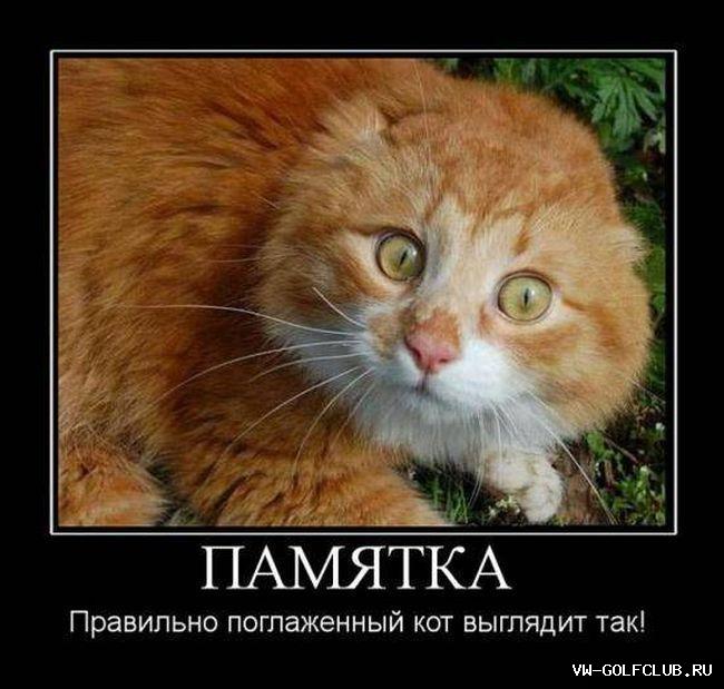 Что штырит котов